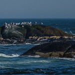 This rock outcrop was covered in gulls.  It wasn't until looking at pictures that I noticed the seals on the lower ledge.