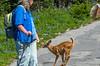 Bambi crosses the trail